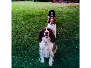 All lined up, pretty as a picture: Luke, Daisy Mae and Trooper