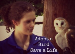 Bird Adoption