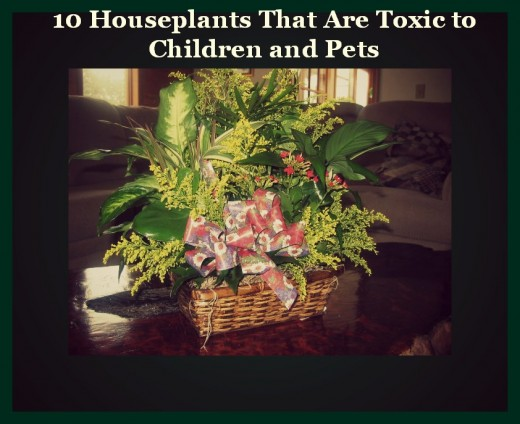 Pet poison prevention and intervention dog walkers Houseplants not toxic to cats