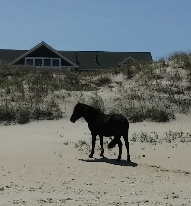 OBX Wild Horse