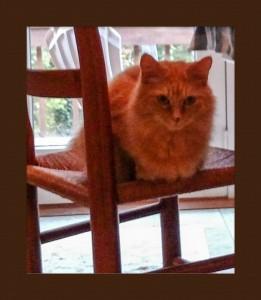 Kitty sitting