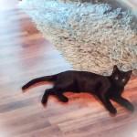 Rescued Kittie