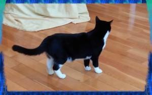 PSX_cat20150427_163911