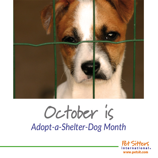 fb_15_october_adopt_shelter_dog_month