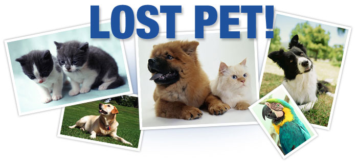 keep your pet from getting lost