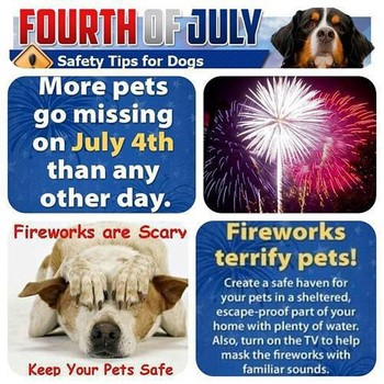 fireworks and pets