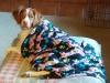 Daisy Mae Cuddling in her Blankie