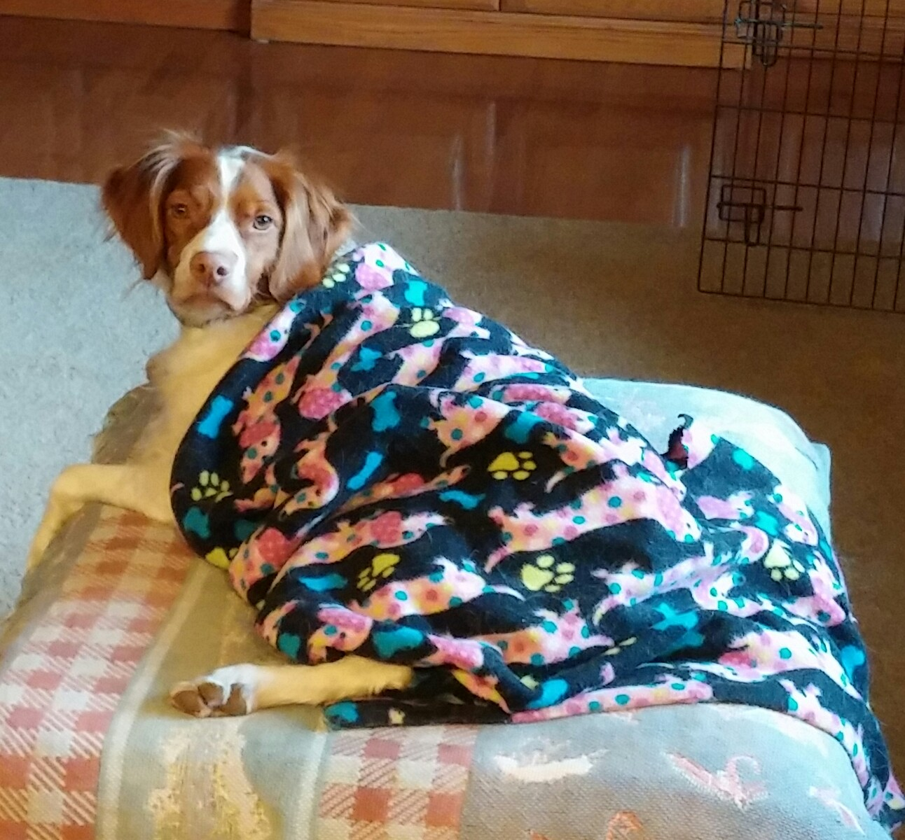 Daisy Mae Getting Warm in her Blankie