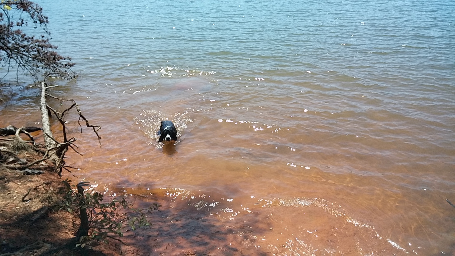 Trooper shows us he knows how to swim.