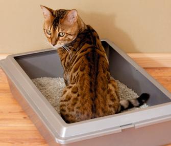 train cat litter outside the litter