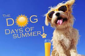 dog days of summerdownload