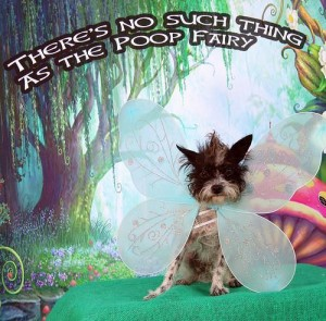 Dogs-dress-up-for-Poop-Fairy-photo-contest
