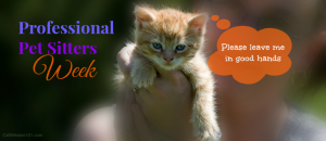 Did you hire a professional pet sitter?