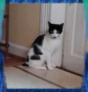 PSX_cat220150425_160422