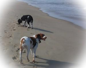 OBX Trooper & Daisy on beachPSX_20150603_200449