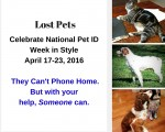 What Type of Pet ID Do Your Pets Need?