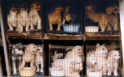 puppy farms