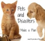 Emergency Preparedness For Your Pets